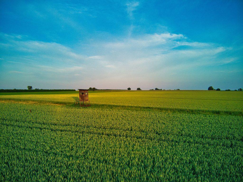 Zwischen den Feldern