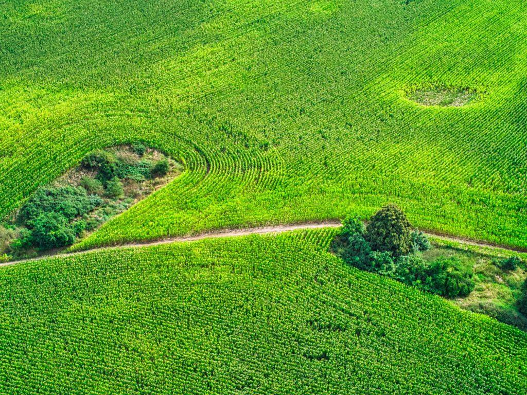 Mais im Bogen mit Loch