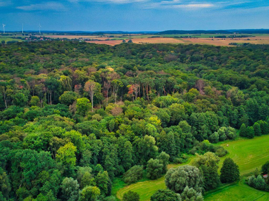 Buchenwälder in der Uckermark