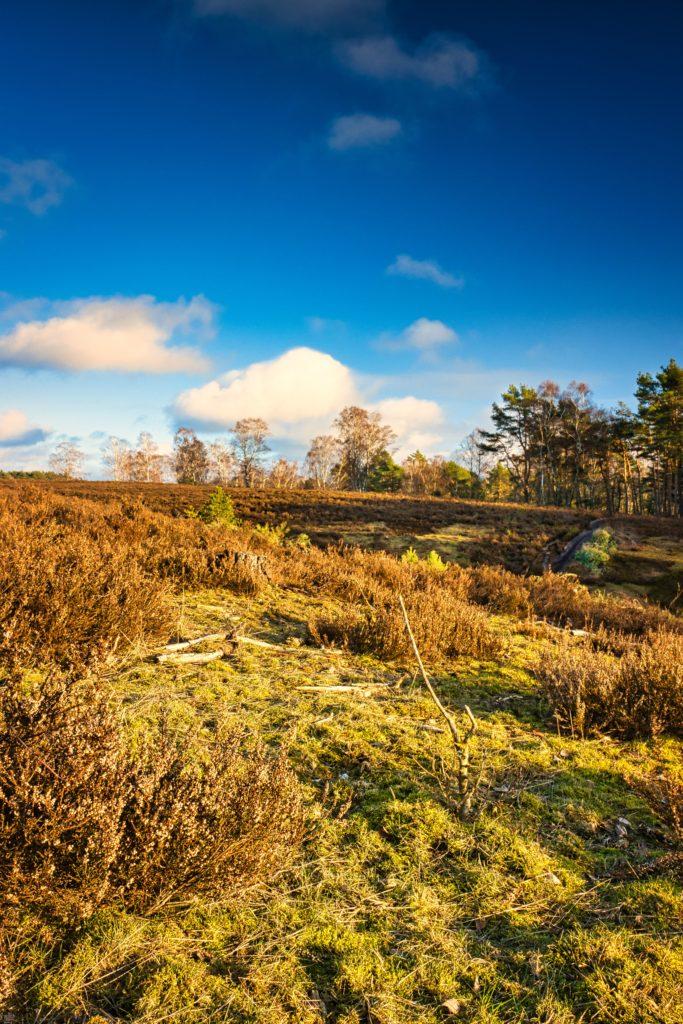 Heide Landschaftspflege