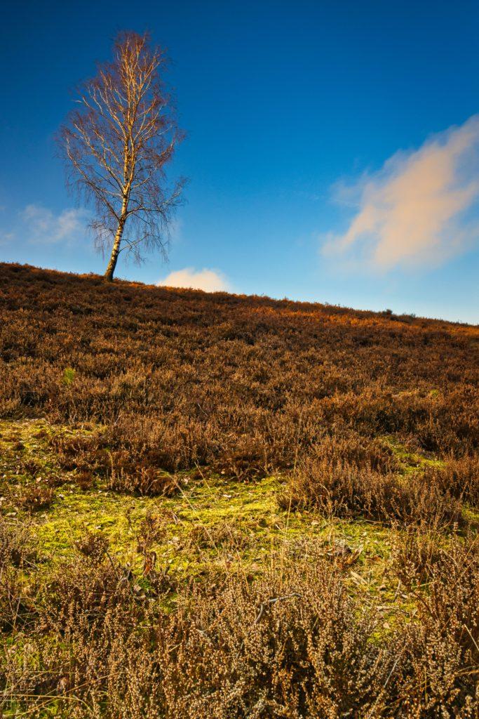 Hügelige Heidelandschaft