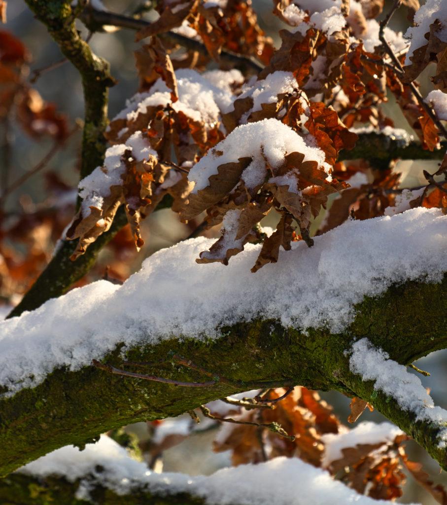 Schnee im Januar