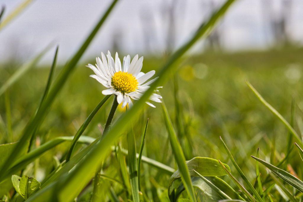 Frühling auf der Wiese