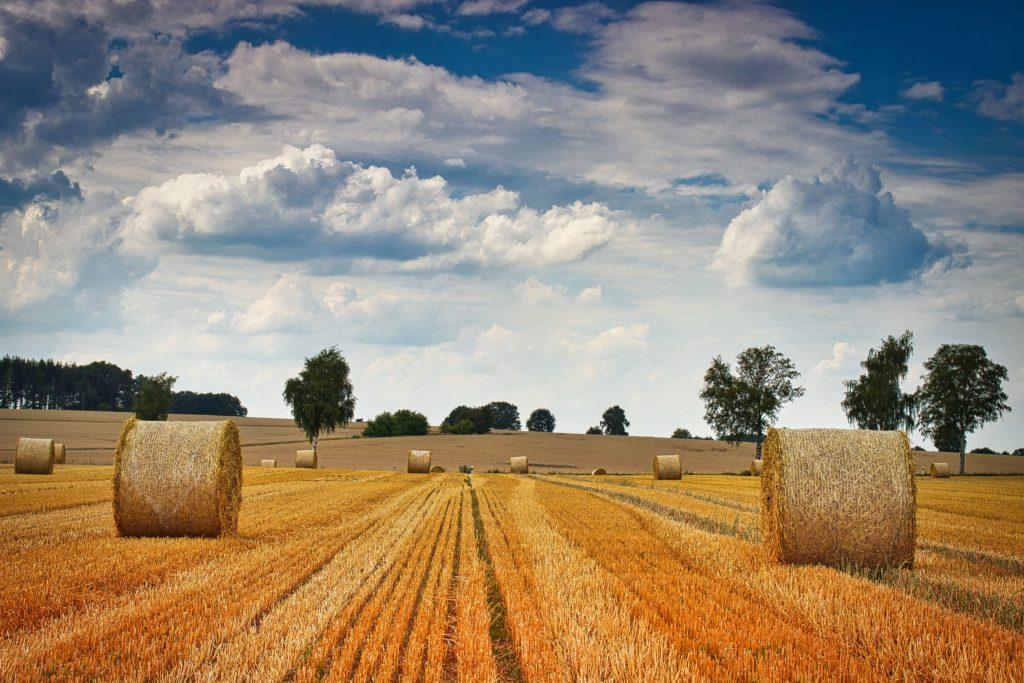 Strohballen auf den Feldern
