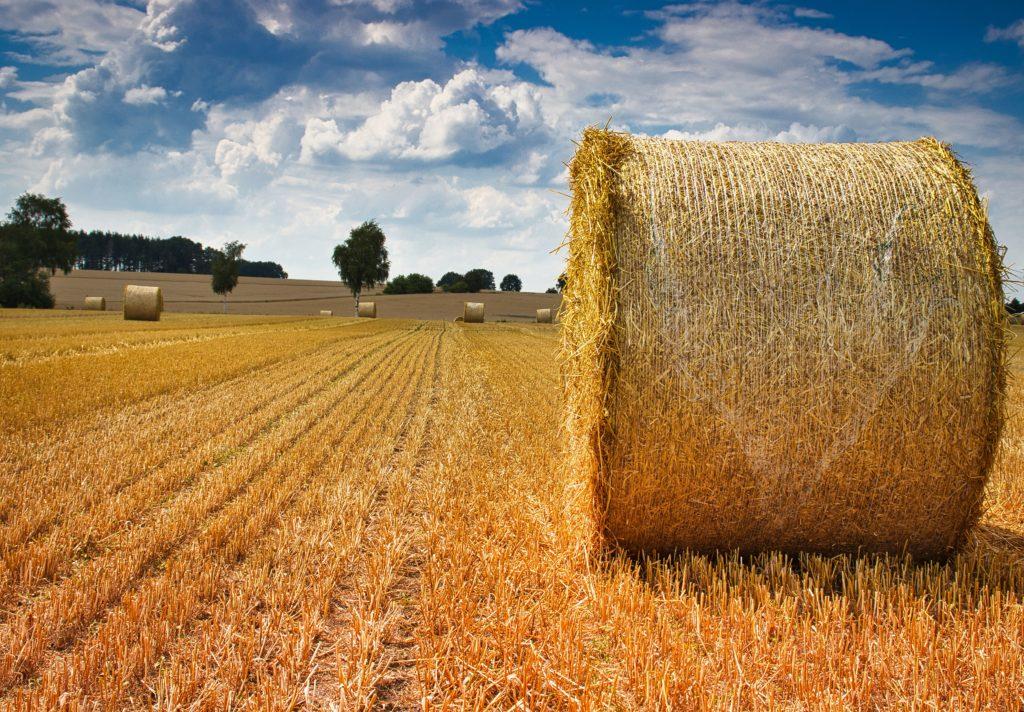 Getreideernte Strohballen