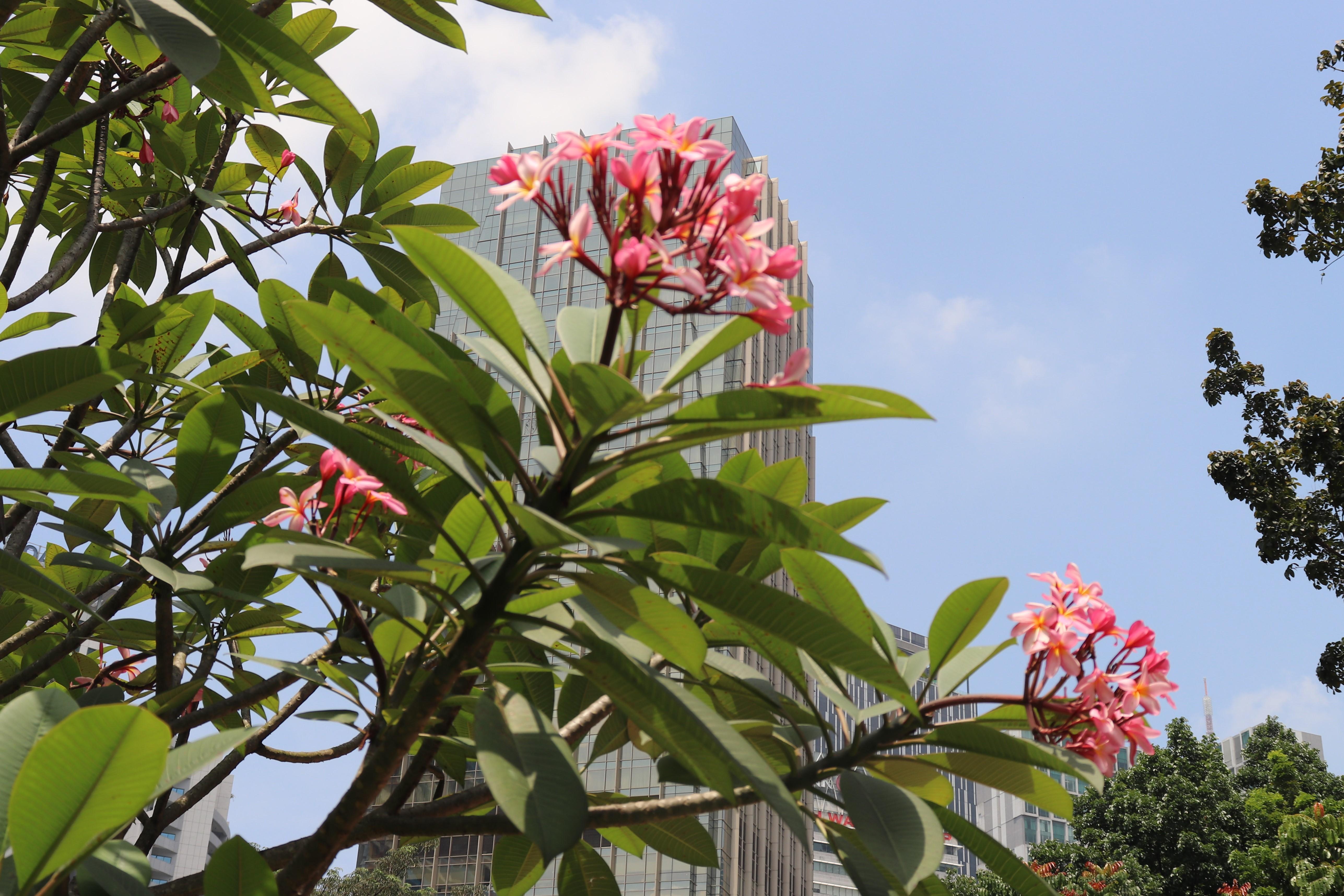 KL Park Petronas Towers