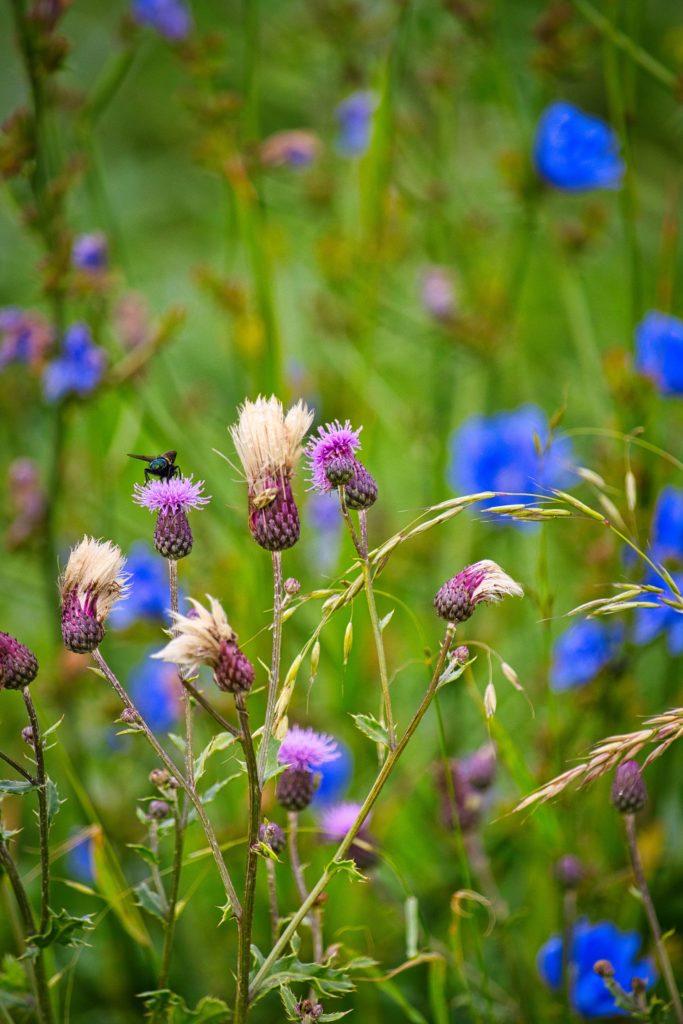 Wiesenblumen in der Uckermark