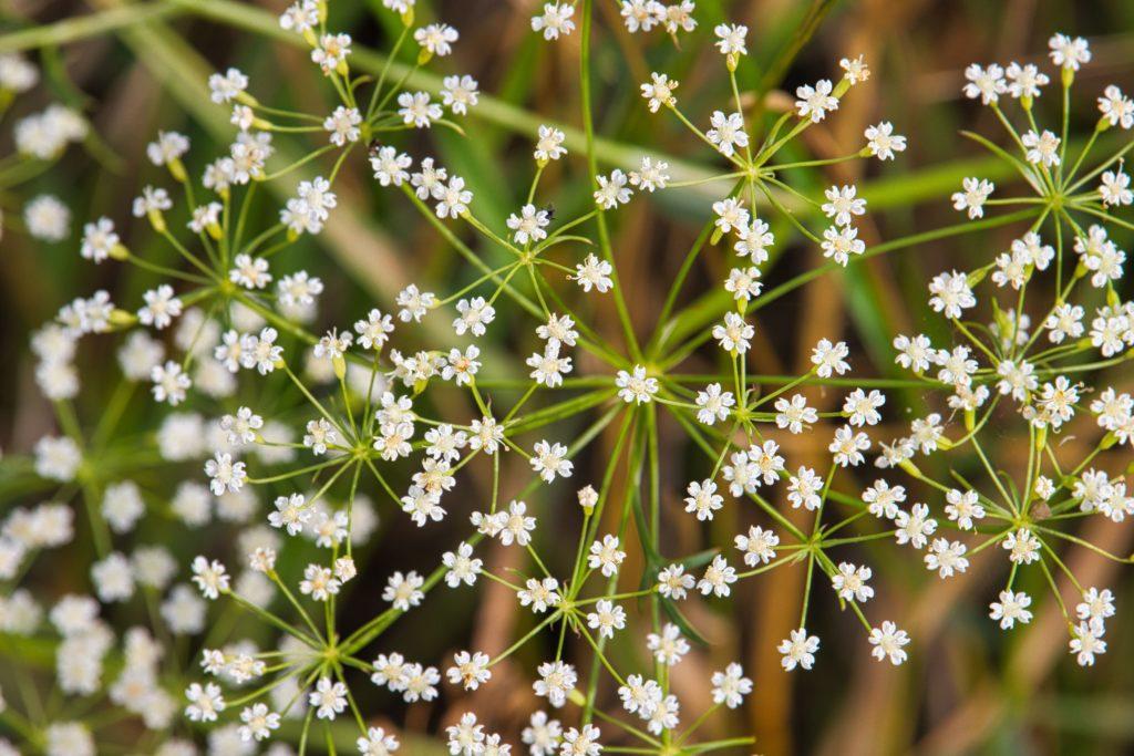 zarte Blüten in weiß