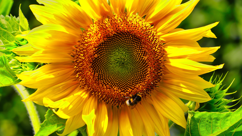 Titelbild Am Sonnenblumenfeld