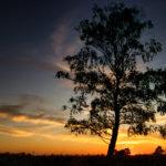 Sonnenuntergang Fischbeker Heide