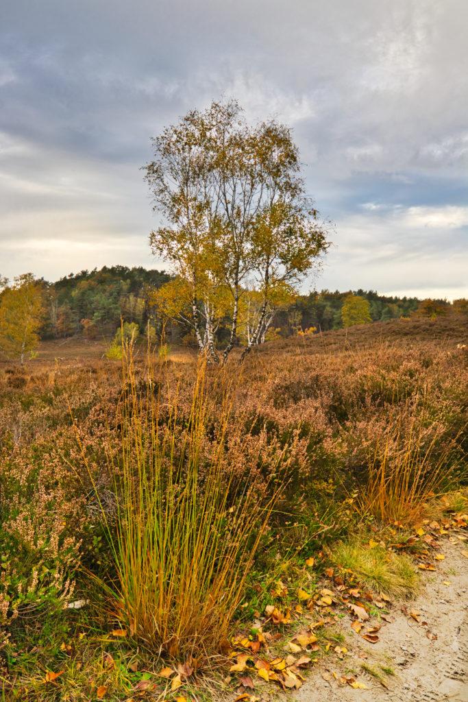 Herbst Fischbeker Heide