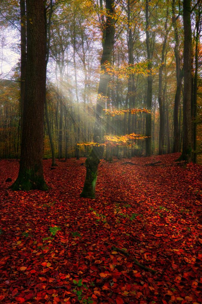 Neuklosteraner Wald