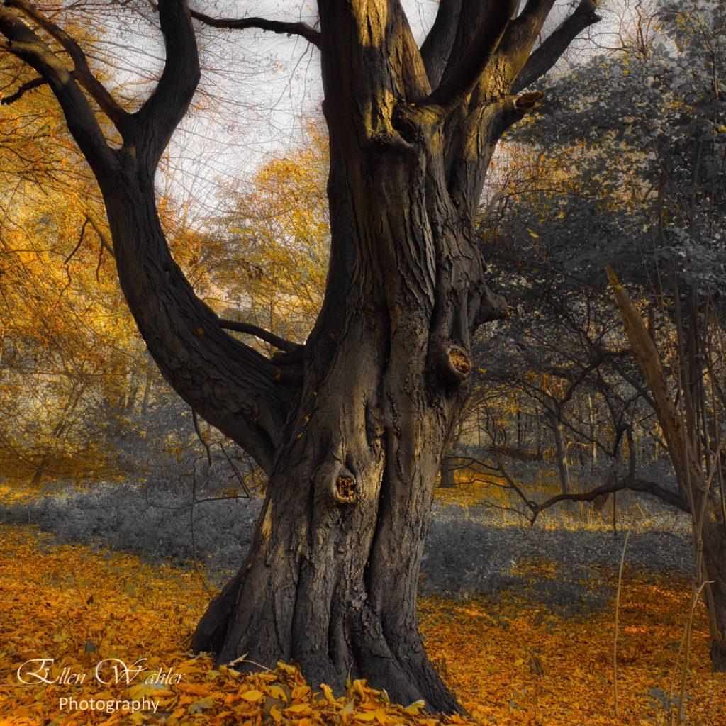 Längst vergessene Bäume - Altenwerder