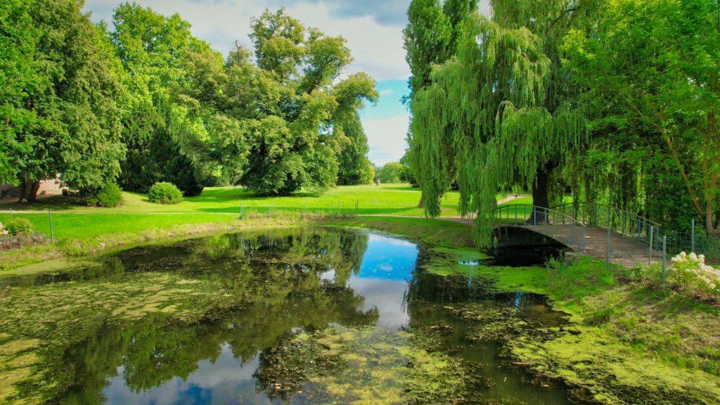 Linde am Froschteich Schlosspark Criewen